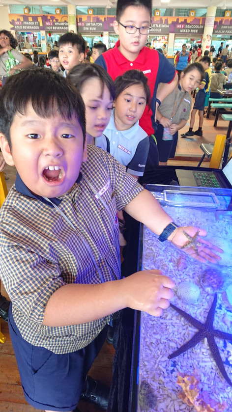 marine touch tank