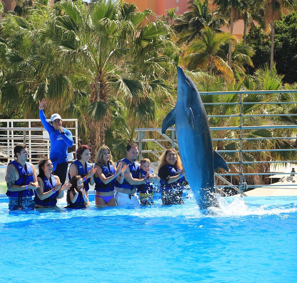 cabo adventures mexico dolphins