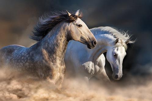 Playing Mustangs