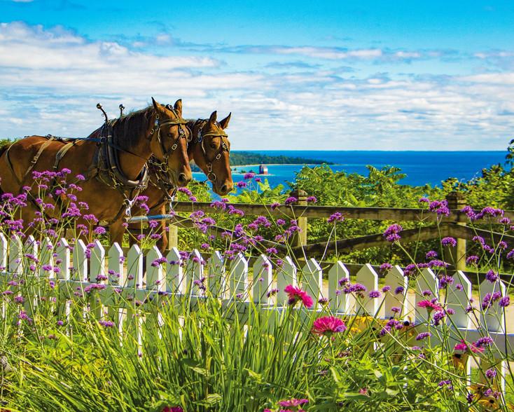 Garden View (Jennifer Wohletz)