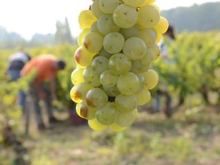 我們對「自然派葡萄酒」的定義