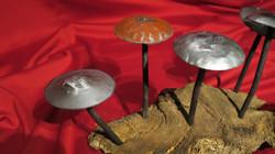 Mushrooms (1)