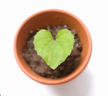 From Stress to Resilience? The Power of HeartMath