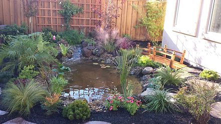 Beautiful Pond and waterfall, self-sustaining ecosystem, residential ecology