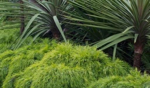 Plant What Pops