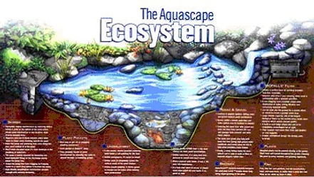 Ecosystem Diagram illustrating the anatomy of a pond ecosystem