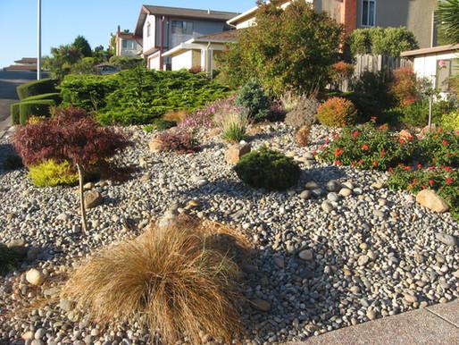 Navigating your Landscape through a Drought