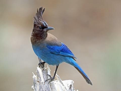 Bay Area Birds