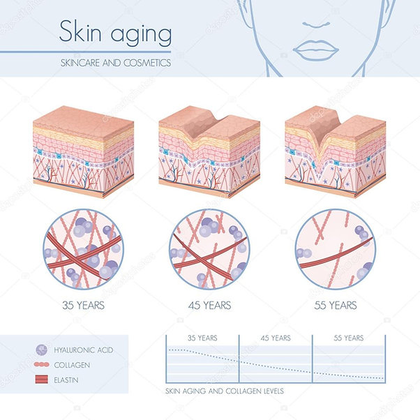 skin aging process.jpg