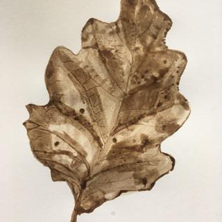 Oak leaf front.JPG