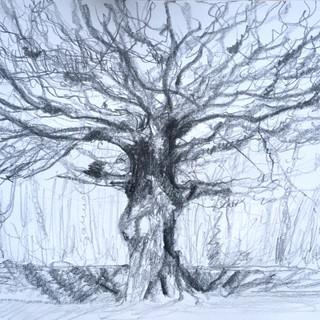 Bysingwood Oak.jpeg