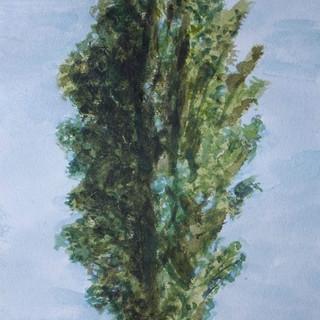 Faversham Creek poplar.jpg