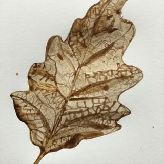 oak leaf back.JPG