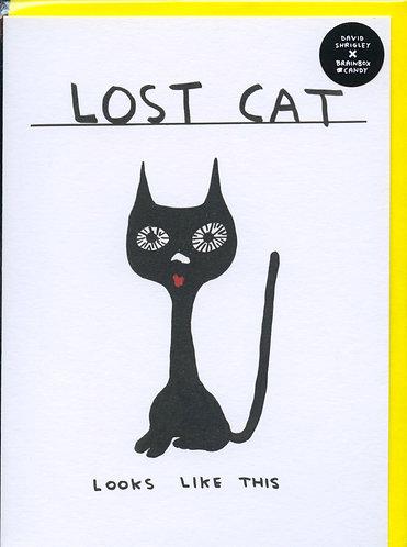 Lost Cat..