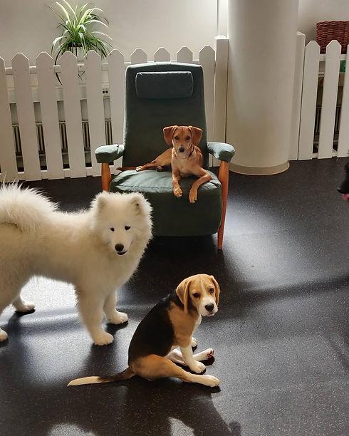 koirapäiväkoti-arkea1.jpg