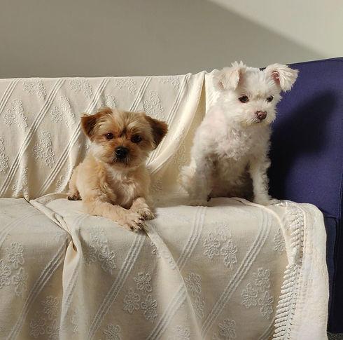 koirahotelli-arkea.jpg