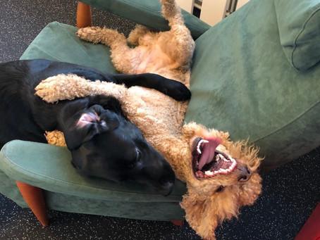 Koiran sosiaalistaminen