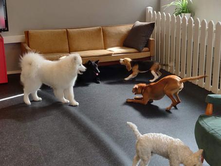 Arkea koirapäiväkodissa