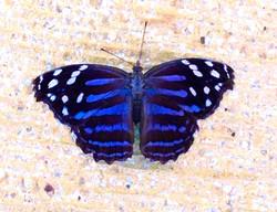 Angelas butterfly.jpg