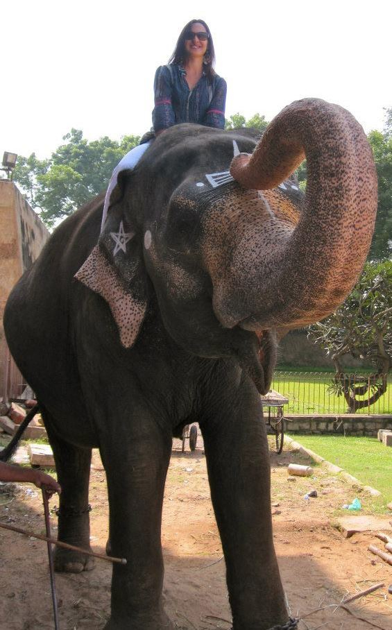 LC elephant2.jpg