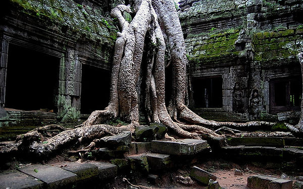 trees-ruin-roots-cambodia-wallpaper-preview.jpg