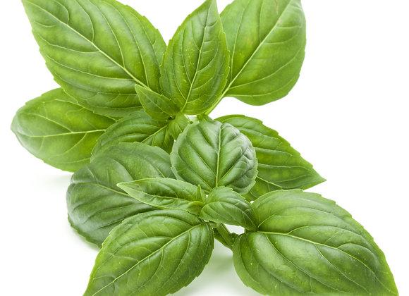 Basil Essential Oil - (Ocimum basilicum)