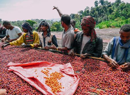 Coffee Origins - Ethiopia Guji Dari Kojuwa