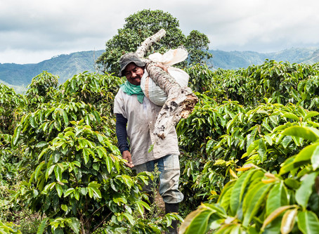 Coffee Origins - Colombia La Marianela