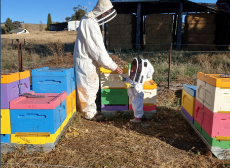 Local honey from Queen of Hearts in Yass