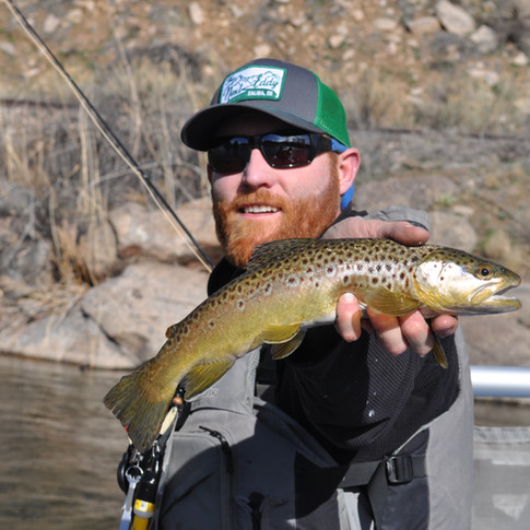 Shimmering Brown Trout on dry flies