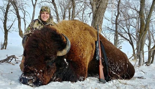 Bison Harvest Bison Hunts
