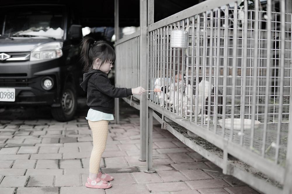 E-Long Goat Farm Yilan
