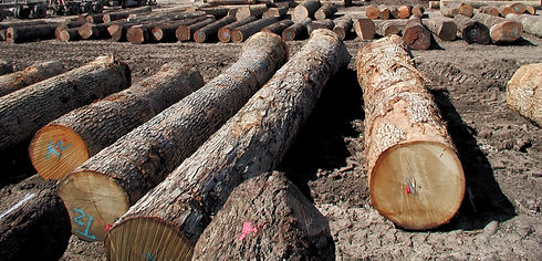 White_Oak_Logs_For_Sale_edited.jpg