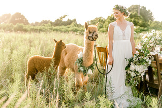 Grass Roots Vintage - Brides of Oklahoma