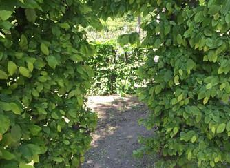 lookbook_garden.jpg