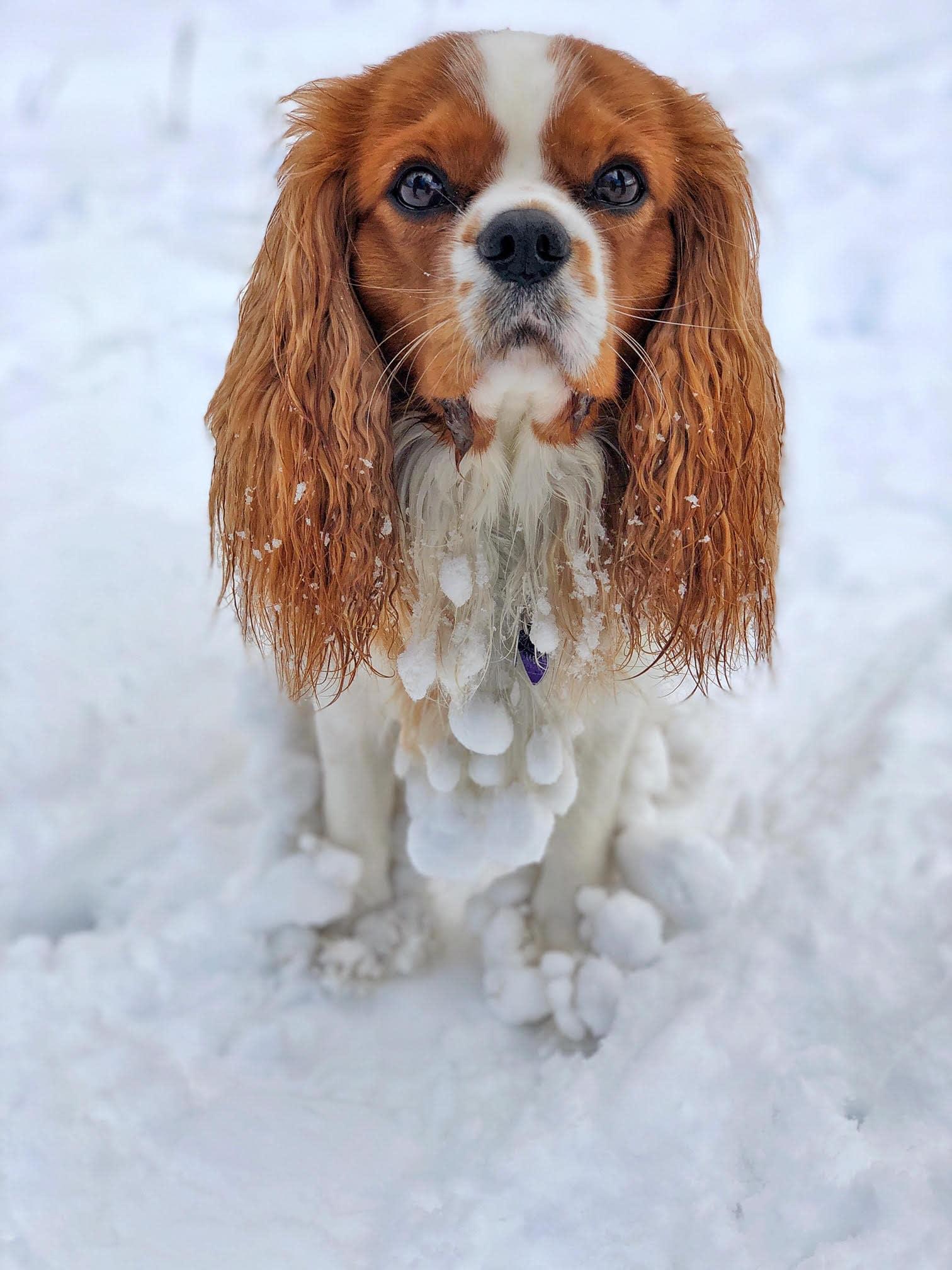 dog_riley_park