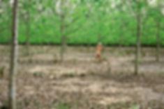 Im Wald bei Fontainbleaux