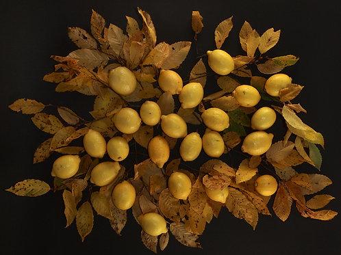 Limonen und Laub