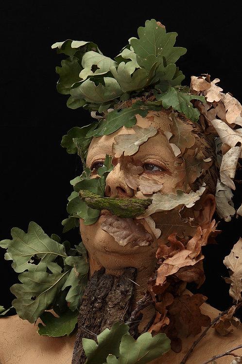 Quercus Germanicum