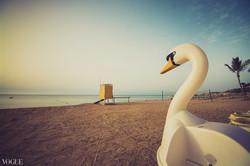 Escape of swan
