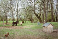Polish landscape with horses