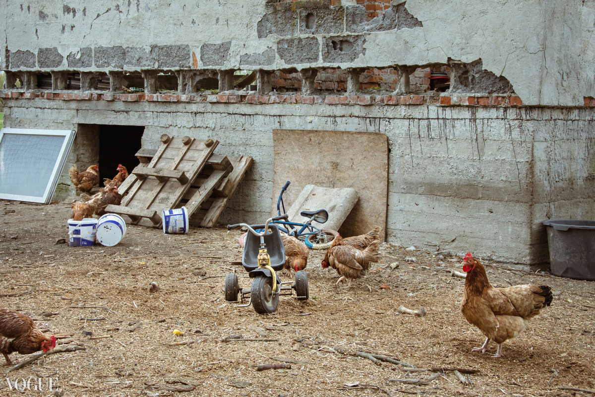 Chickencoop scene