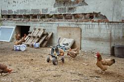Chickencoop scene