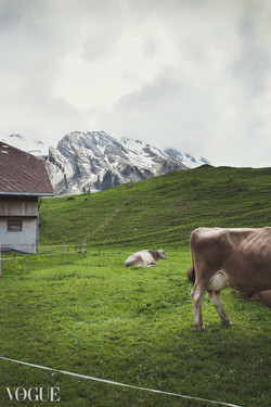 Countryside with cows and mountains