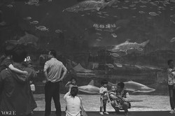 People and sharks