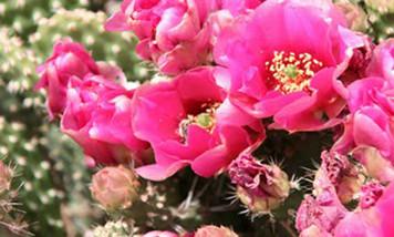 cactus8.jpg