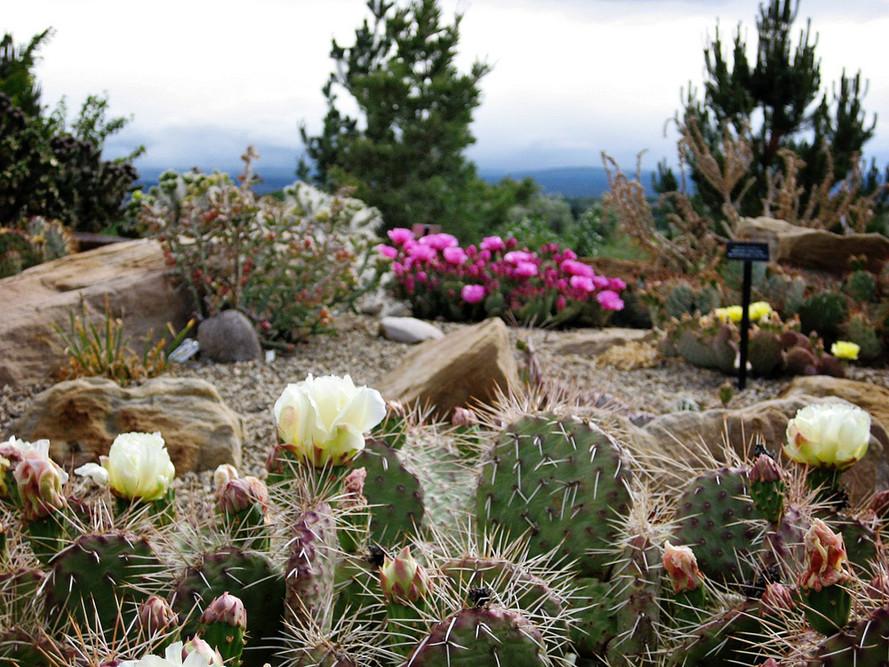 cactus4.JPG