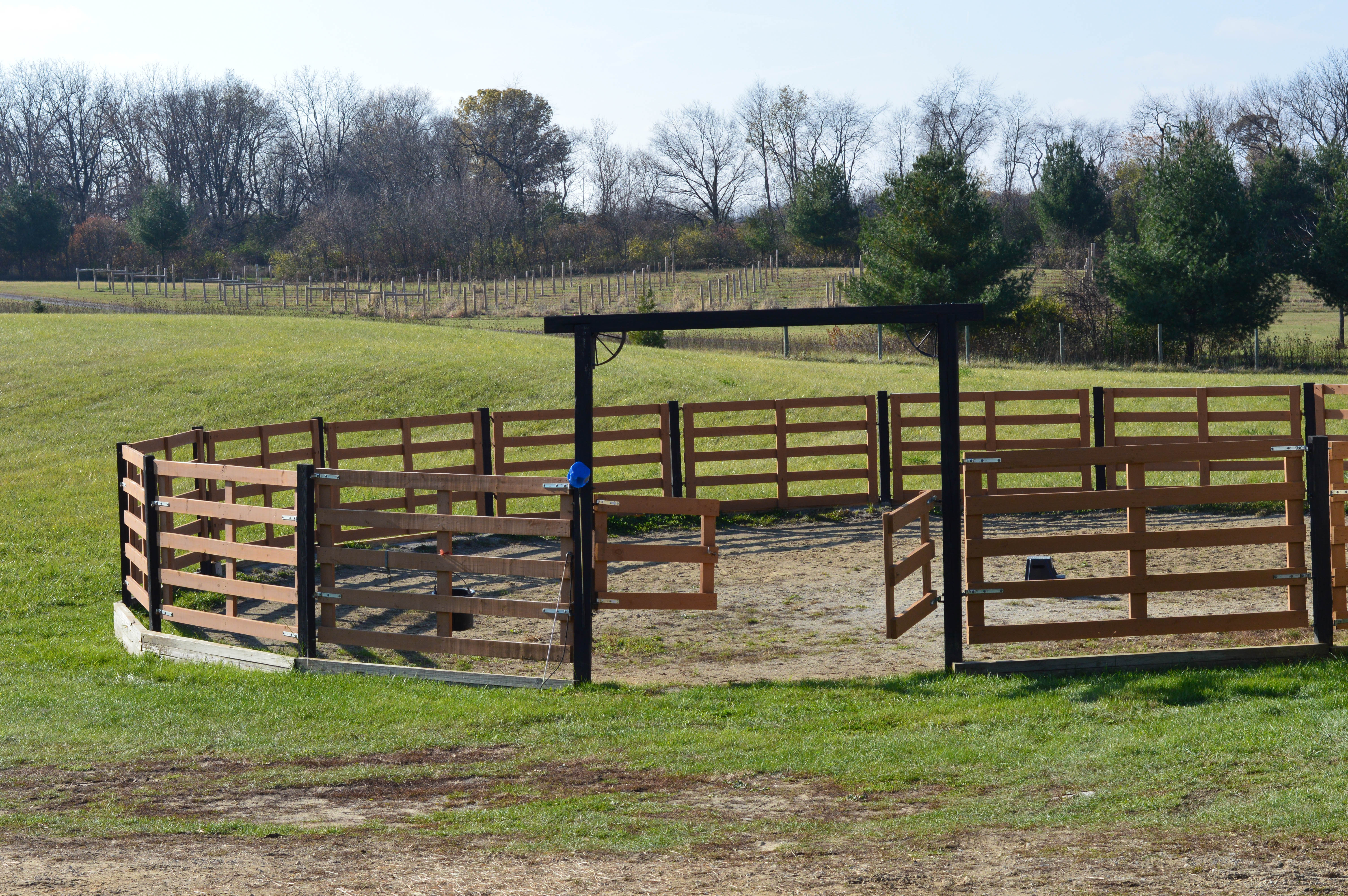Horse Training_Southern_WI