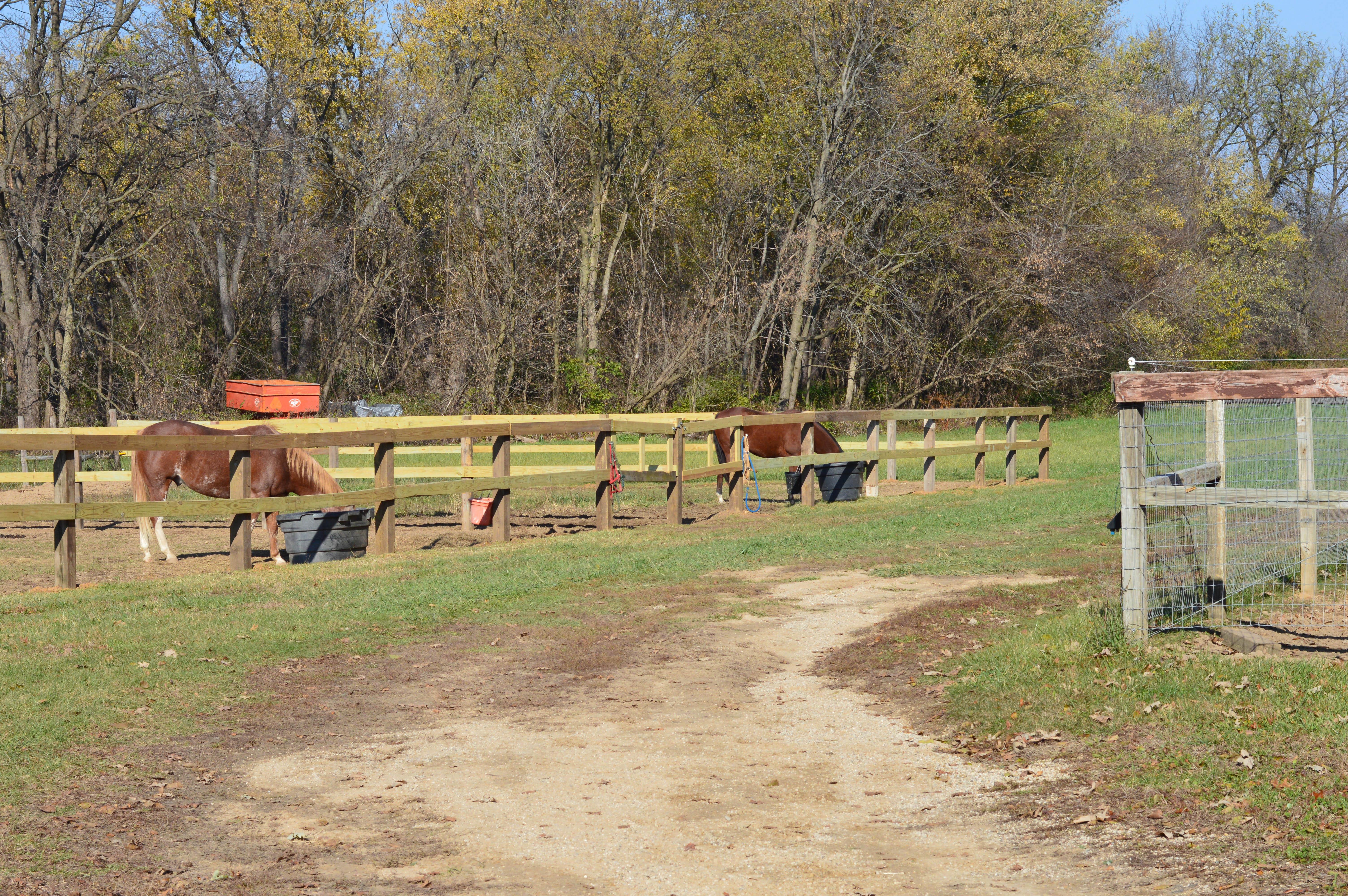 Trail Riding_Rockton_Roscoe_Horse