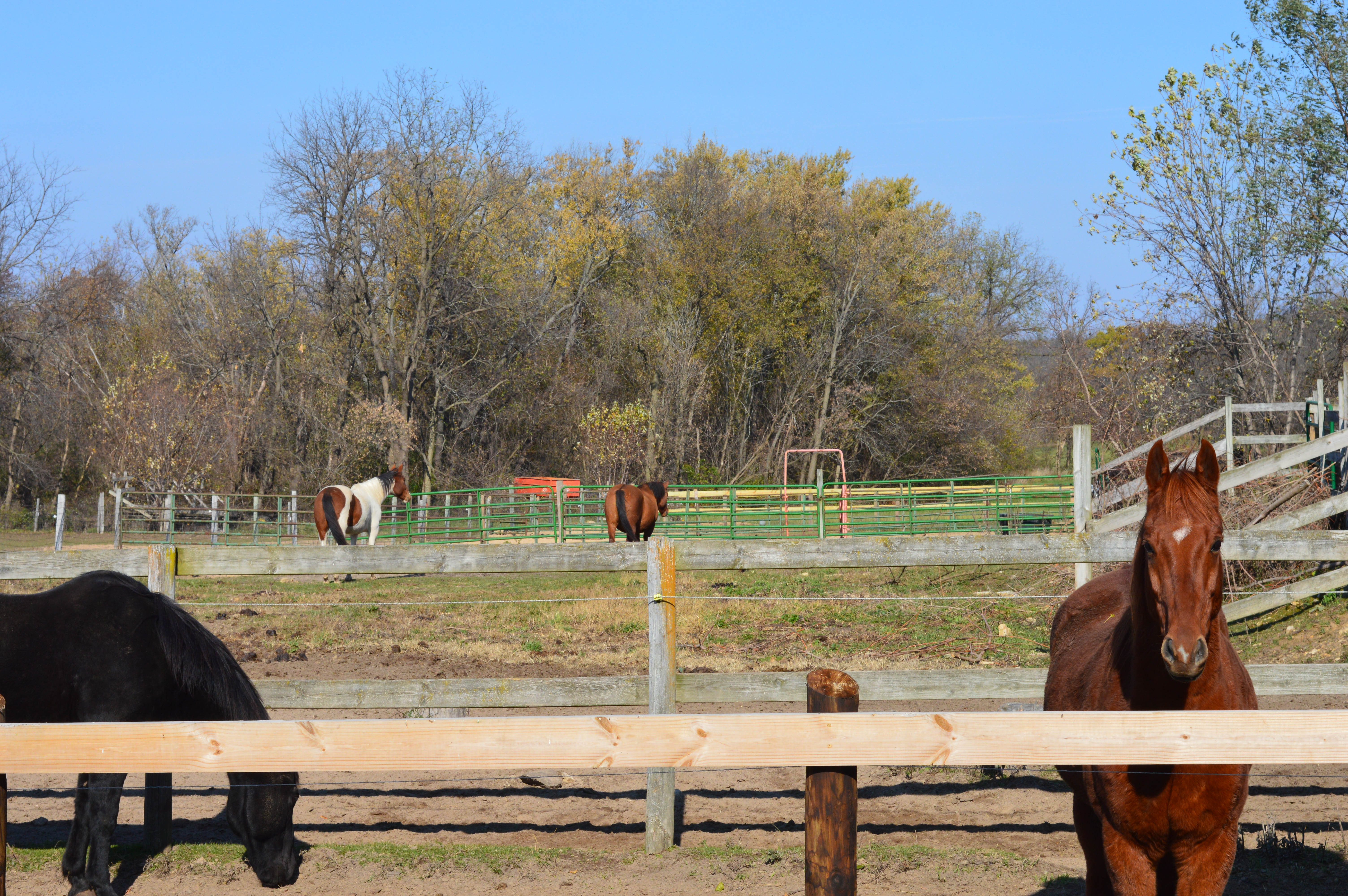 Horse Barns_Northern_IL